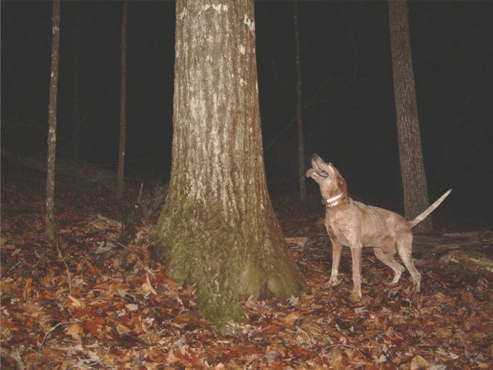 A Ghost and a Coon Hunt