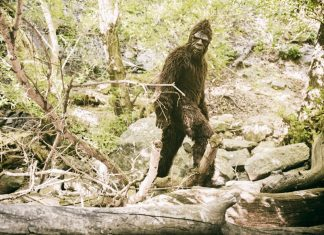 Logan Bigfoot Seen