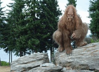 On Going Bigfoot Encounters