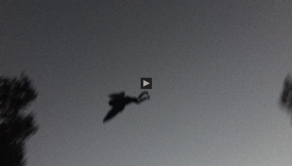wchstv-mothman