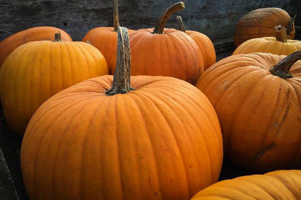 Pumpkin Harvest Festival