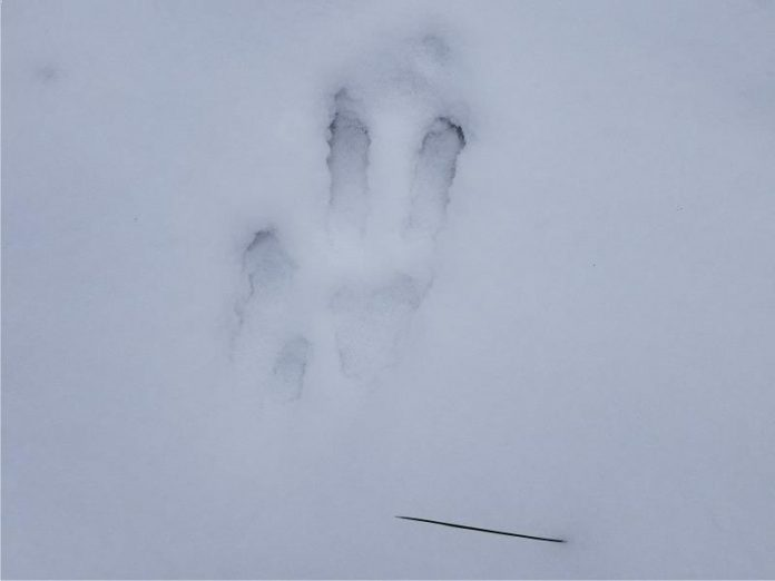 Unidentified Footprints